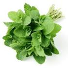 Picture of HERBS MINT